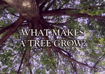 Rooted — Series Trailer/Bumper Video